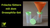 Video Drosophila Set